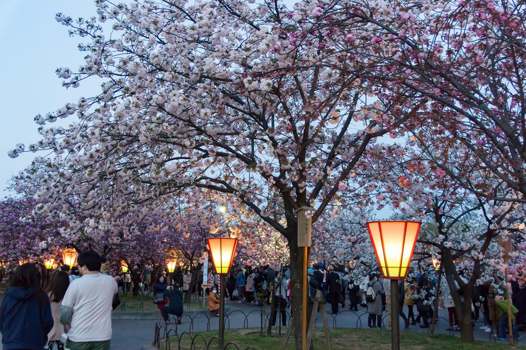 Cultural Day-JAPAN