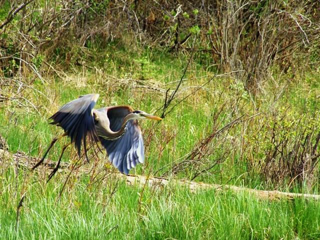 Inglewood bird sanctuary