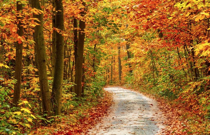 Autumn Colours Trail Walk