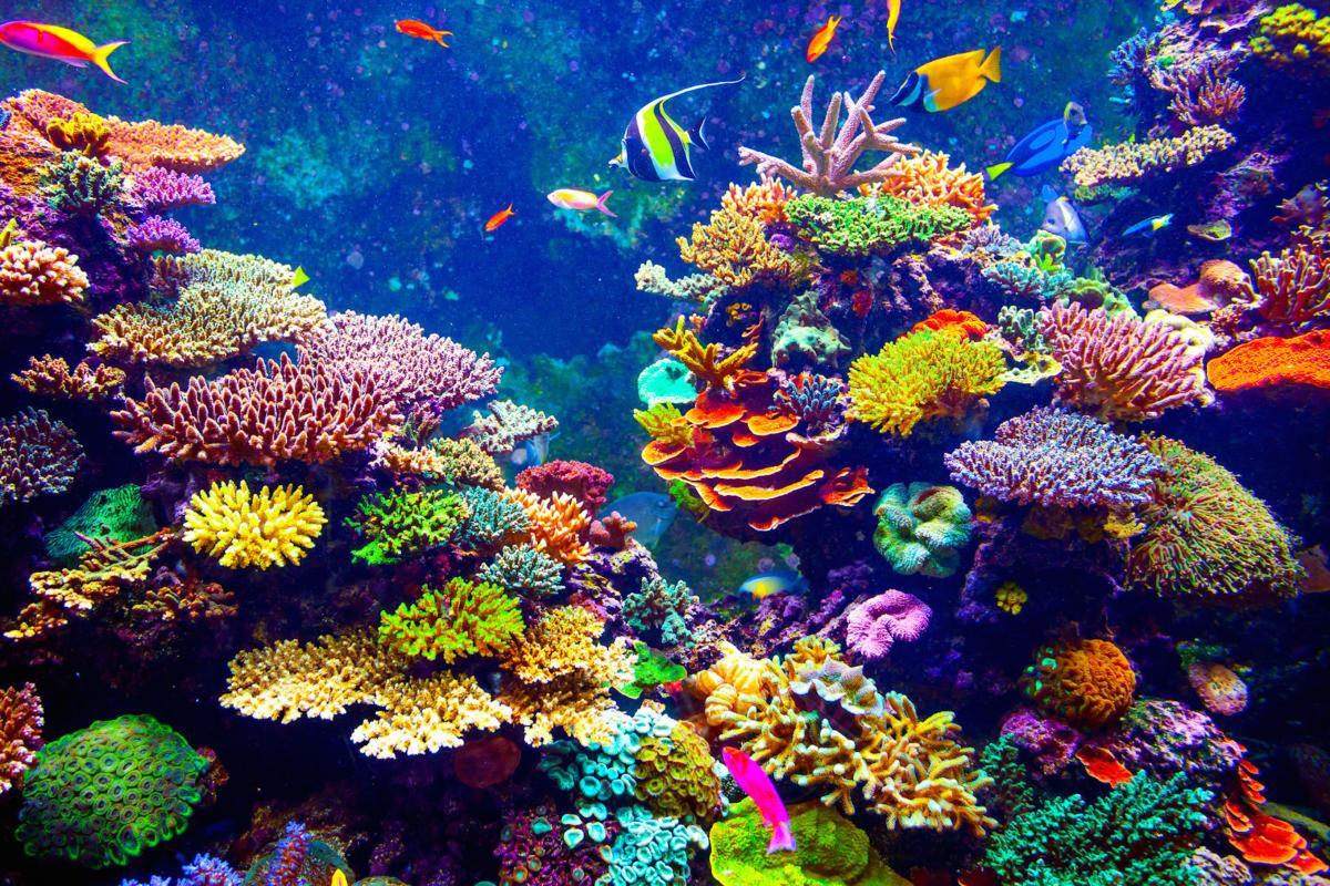 Blue Planet: Ocean World